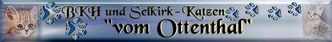 Britisch-Kurzhaarkatzen vom Ottenthal